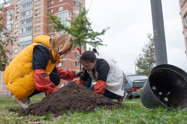 На западе Москвы началось осеннее озеленение