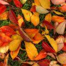 Москвичи выбрали свободные от листвы дворы