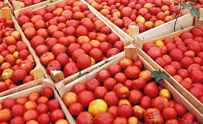 Без помидоров, но с бюрократией