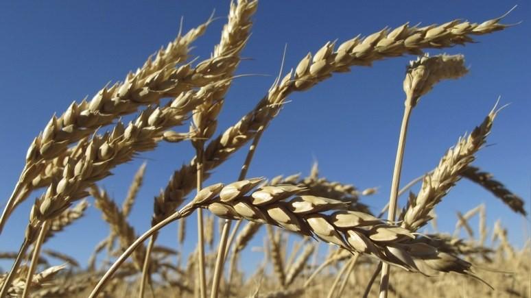 Finanz und Wirtschaft: сельское хозяйство нескоро снимет Россию с «нефтяной иглы»