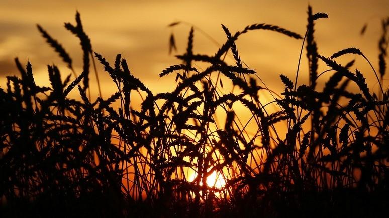 WSJ: хорошая погода и слабый рубль сделали Россию «сельскохозяйственной сверхдержавой»