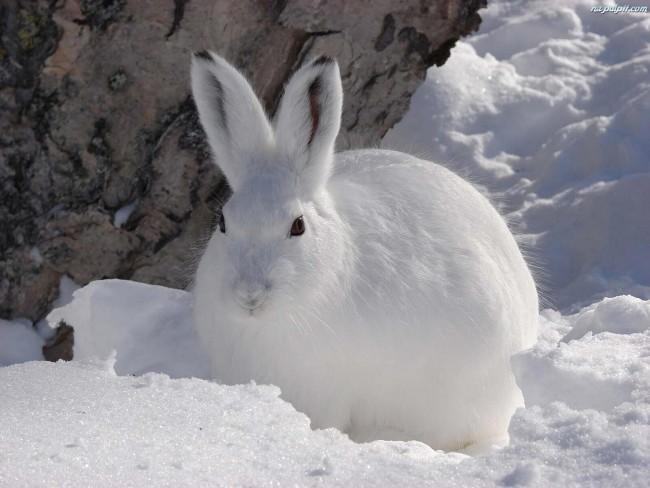 В природном парке «Серебряный бор» впервые установят кормушки для зайцев