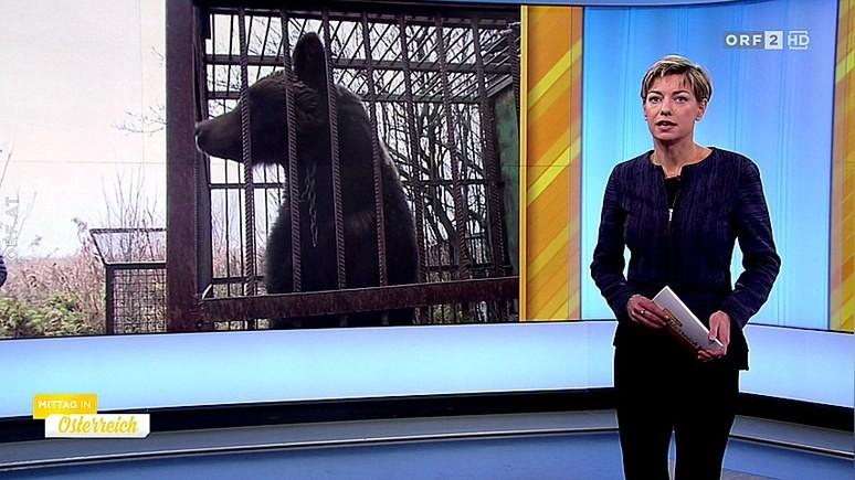 ORF: австрийцы спасают медведей из украинского плена